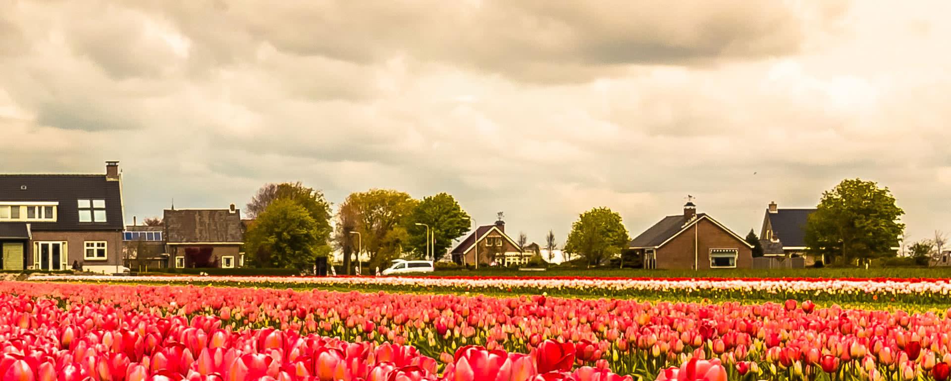 Titelbild von Noordwijk